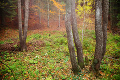 Autumnal forest environment Stock Photography