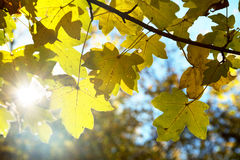 Autumnal forest environment Stock Photos