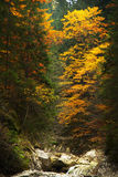 Autumnal forest environment Royalty Free Stock Image