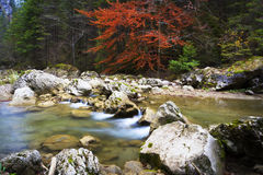 Autumnal forest environment and a mountain river Stock Image