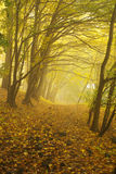Autumnal Forest in Fog Stock Images