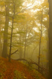 Autumnal Forest in Fog Royalty Free Stock Image