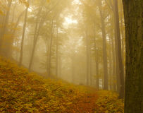Autumnal Forest in Fog Stock Photo