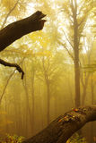 Autumnal Forest in Fog Stock Photos