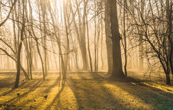 Autumnal forest on a foggy November morning. Photo took in Moscow, Russian, photo is usable on picture post card, calendar, gardening, for wallpaper Royalty Free Stock Photography