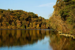 Autumnal forest and lake Royalty Free Stock Photography