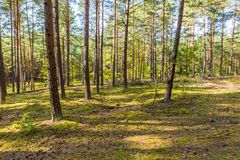 Autumnal forest landsape Royalty Free Stock Photography