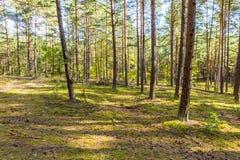 Autumnal forest landsape Stock Images