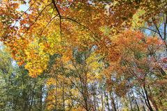 Autumnal forest Royalty Free Stock Photography