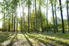 Autumnal forest Stock Images