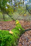 Autumnal forest landscape Stock Photos