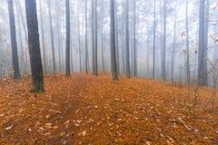 Autumnal forest landscape Stock Image