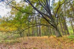 Autumnal forest landscape Stock Images