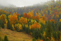 Autumnal forest landscape in the mist Royalty Free Stock Photography