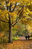 Autumnal forest in maple tree way Royalty Free Stock Photos