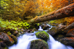 Autumnal forest with mountain creek Stock Photos