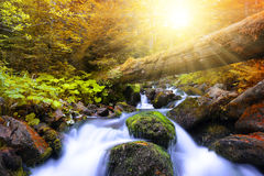 Autumnal forest with mountain creek Royalty Free Stock Images