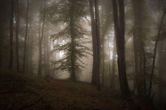 Autumnal forest with mysterious fog Stock Photos