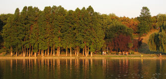 Autumnal forest near the lake. Autumn trees reflexion in the lake Stock Photo