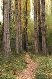 The autumnal forest Path. Autumn season. Trees and vegetation typical of this season Stock Photos