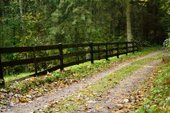 Autumnal forest road Stock Images