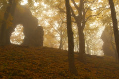 Autumnal Forest Royalty Free Stock Photo