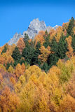 Autumnal Forest shows its colour in the italian Alps Mountain un Stock Photography