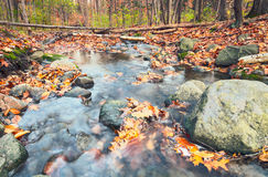 Autumnal forest. Small creek in the woods, fallen leaves in a stream Royalty Free Stock Image