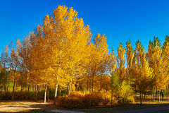 The autumnal forest sunrise Royalty Free Stock Image