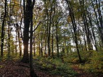 Autumnal forest at sunset in backlighting Royalty Free Stock Photography