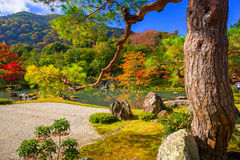 Autumnal forest at tenryu-ji temple Royalty Free Stock Photos