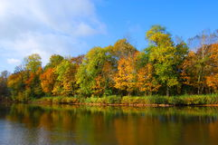 Autumnal forest un der blue sky Stock Photo