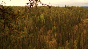 Autumnal forest. View of autumnal finnish forest Stock Photography