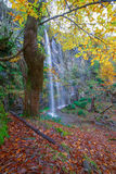 Autumnal forest with waterfall Stock Photos