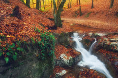 Autumnal forest and waterfall rolling down. Through rocks and boulders Royalty Free Stock Images