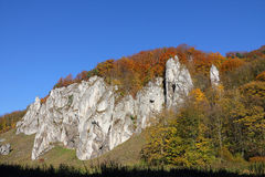 Autumnal forest and white rock. Stock Photo