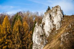 Autumnal forest and white rock,Ojcowski National Park, Ojcow, Poland Royalty Free Stock Photo
