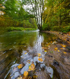 Autumnal forest with wild river Royalty Free Stock Photo