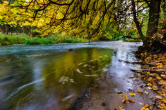 Autumnal forest with wild river Stock Photos