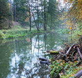 Autumnal forest with wild river Stock Photography