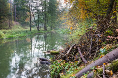 Autumnal forest with wild river Royalty Free Stock Image