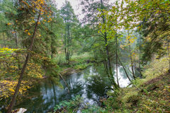 Autumnal forest with wild river Stock Image