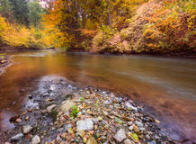Autumnal forest with wild river Stock Photo