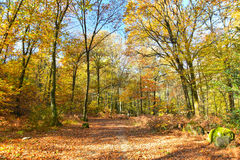 Autumnal forest with yellow leaves Stock Photos