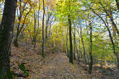 Autumnal forest with yellow leaves Stock Images
