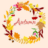 Autumnal frame with leaves and berries Stock Photos