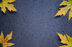 Autumnal frame of yellow maple leaves on a black background Stock Photo