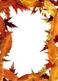 Autumnal framework Royalty Free Stock Photo