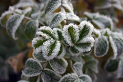Free Autumnal Frost Stock Photo - 222030