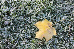 Autumnal Frost on a Grass. Closeup of autumnal frost on the yellow maple leaf and green grass, top view. Suitable for an abstract background Stock Images